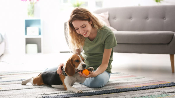 Are Your Pets Harming Your Home's Air Quality?